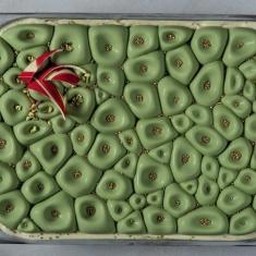 Coral Καλούπι σιλικόνης Pavoni για παγωτά