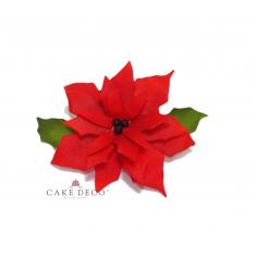 Αλεξανδρινό Χριστουγεννιάτικο Λουλούδι
