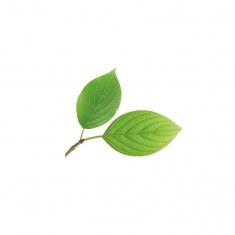 Σετ Αποτυπωτή και μεταλλικό κουπάτ για Φύλλα